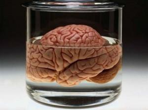 La non fuga dei cervelli